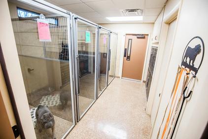 Canine Ward - Runs