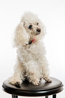 Northgate_Pet_Clinic_Portraits-13.jpg