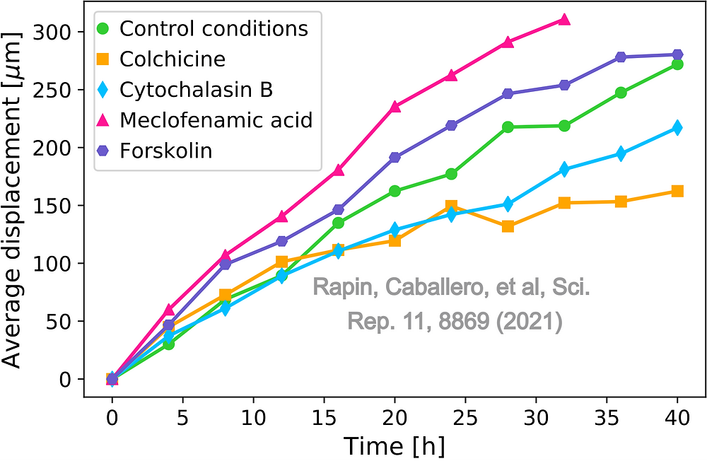 Cells under Meclofenamic acid, or Forskolin move faster, compared with the control conditions case. Cells under the effects of Cytochalasin B and Colchicine move slower.