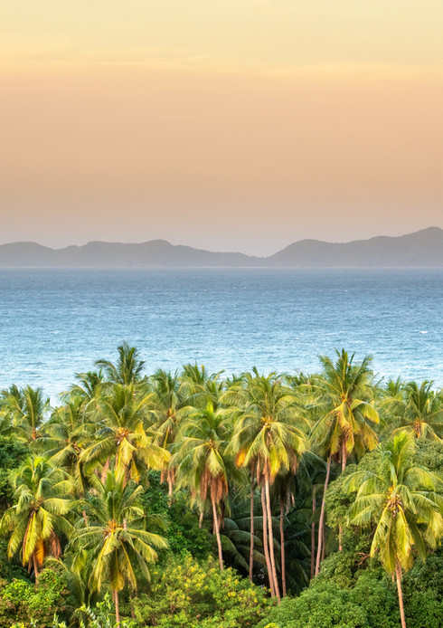 palm tree phillipines (1 sur 1).jpg