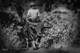 birmanie buffalo 2 (1 sur 1).jpg