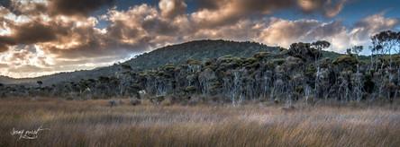 NZ catlins marais (1 sur 1).jpg