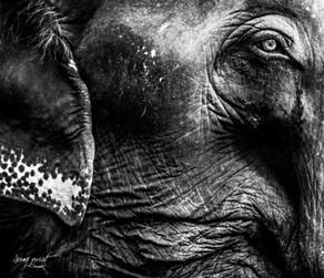 koh chang elephant