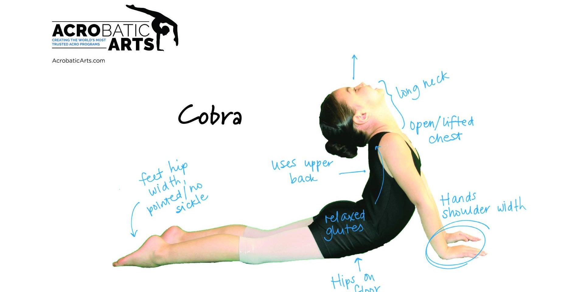 Cobra 2.jpg