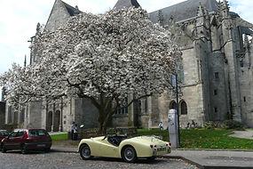 le magnolia en fleurs à Dinan