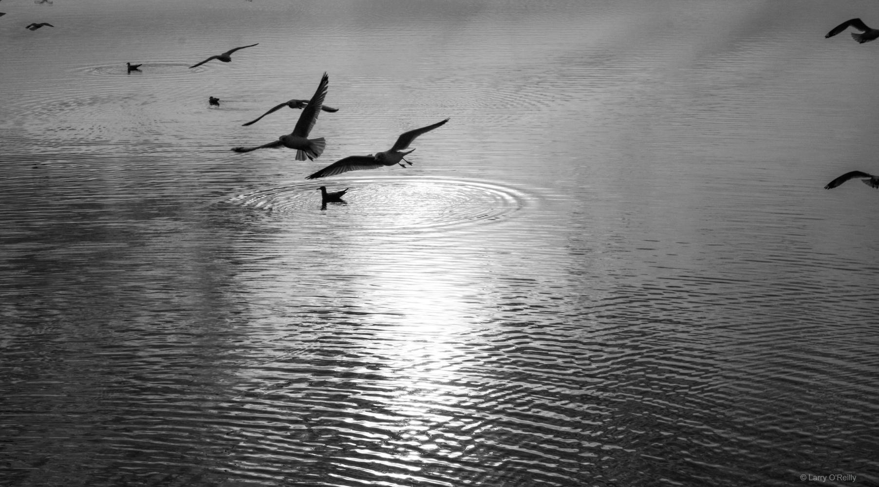 Flying Potomac