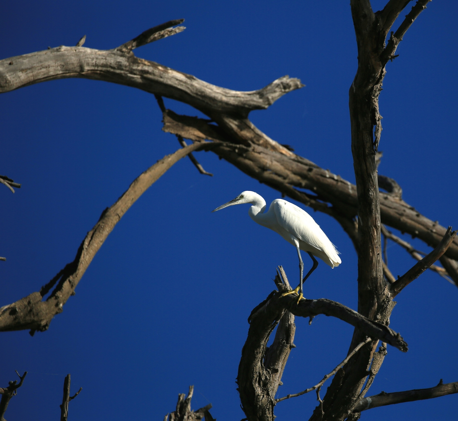 White Bird, Blue Sky