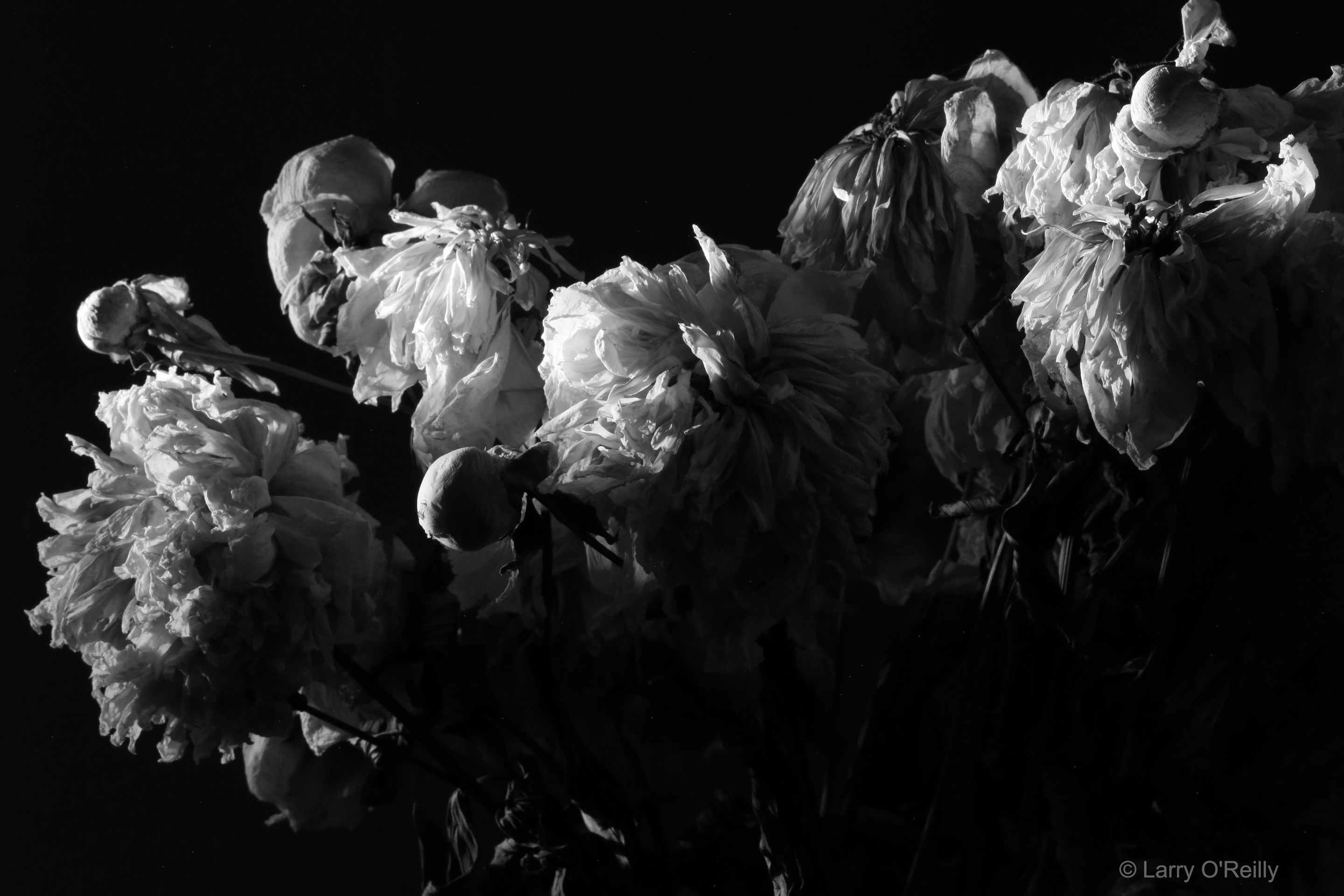 4 a.m. Flowers, 2015