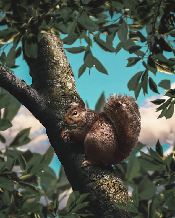 Squirrel Edit