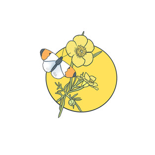 yellow buttercup with butterfly