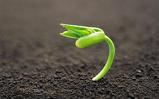 Planta creciendo