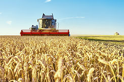 combine-harvester-harvests-ripe-wheat.jp