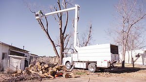 A tree service being performed in Las Cruces, NM