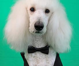 dog butler.png