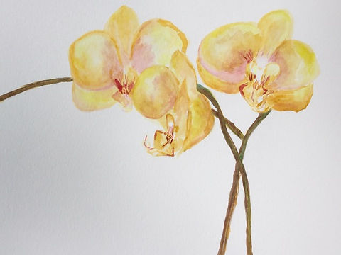 yellow orchids- watercolor.jpeg