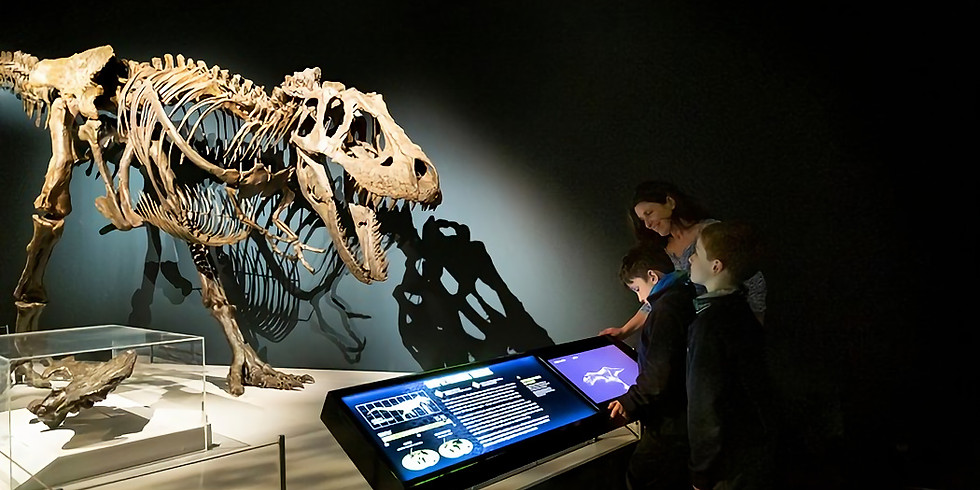 Tyrannosaurs at the National Museum of Scotland