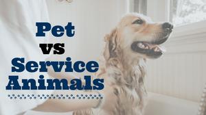 Pets vs. Service Animals | Spring Hill, FL Property Management Advice