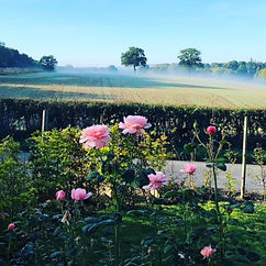 • Misty morning • 💕A friend took this o