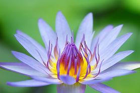Meditation Practice.jpg