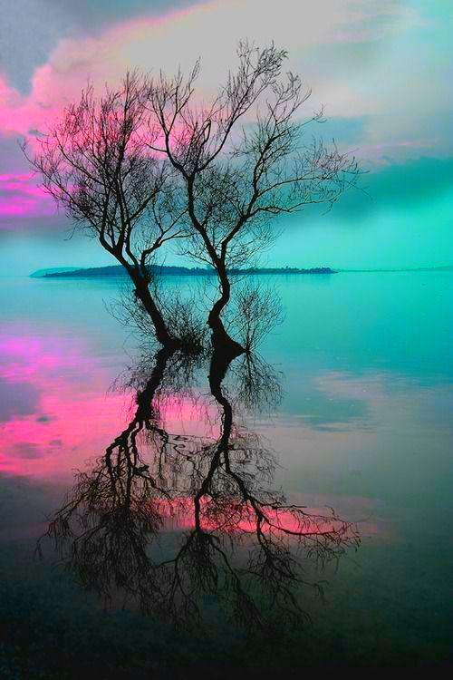 Bare trees w_turq & hot pink skies