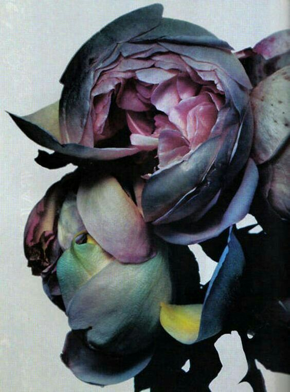 Lush flowers II