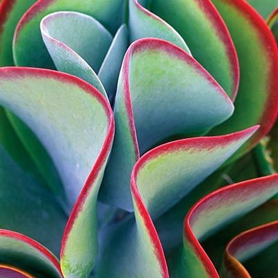 e0ef6ce32cdd88deb9d8f9ebf70f6ba9--colorful-succulents-succulents-garden