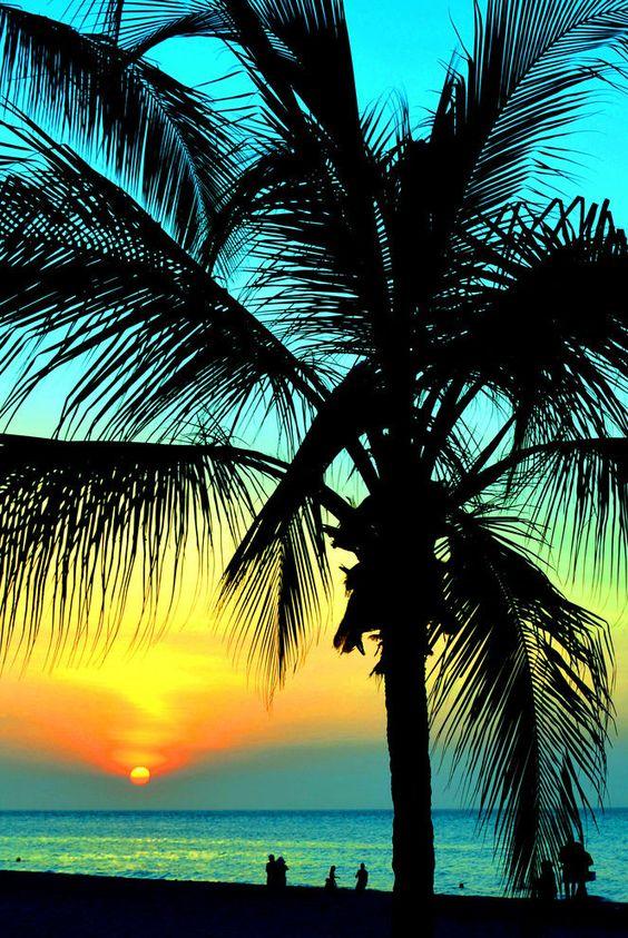 Silhouette Palms