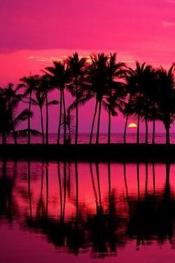Palm trees magenta sky