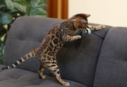Phantasm right pattern on couch cat teas
