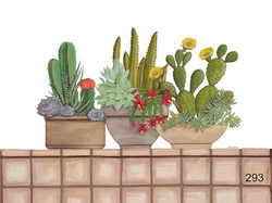 WR-Cacti And Succulents 1200