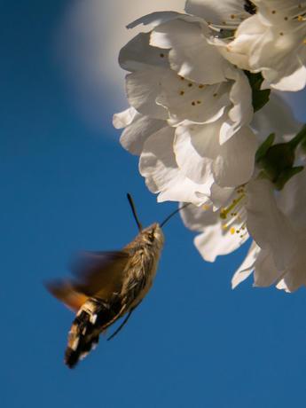 Shynx - colibri