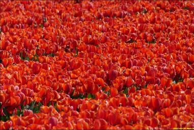 multitude rouge...