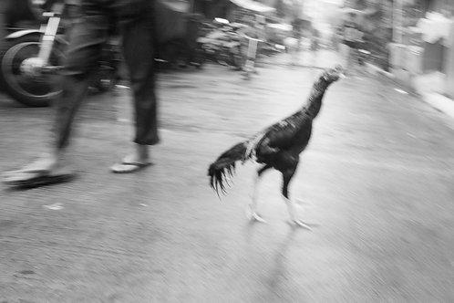 Manila Photo #35