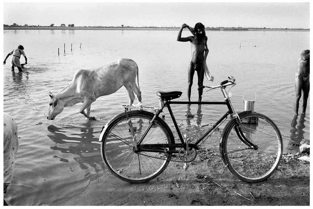 Allah O Akbar A Sadhu (monje hindú) y los peregrinos se bañan en el río. Una vaca bebe de él. Ayodhya, Uttar Pradesh, India. 1990 © Abbas | Magnum PhotosLicencia |