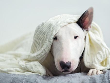 Kann man einen hässlichen Hund lieben?