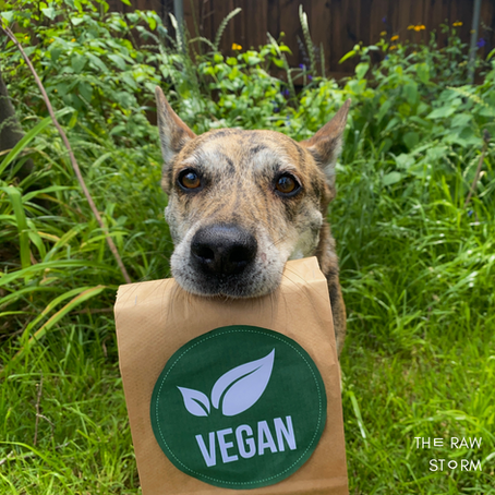Can You Feed Dogs A Vegan Diet?