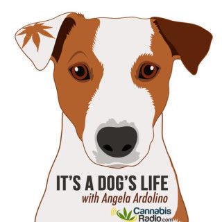 it's a dog's life.jpg