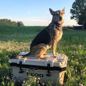 The Ultimate Guide To Traveling With Raw Dog Food