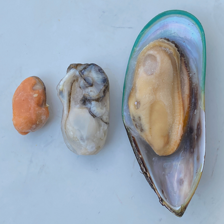 A Guide To Shellfish In Raw Diets
