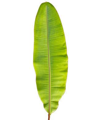 バナナの葉