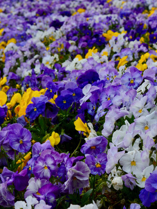 Spring in Madrid