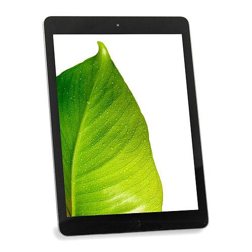 Apple iPad 5th Gen 32GB Wi-Fi/Cellular (2017) | In-Store Pick Up