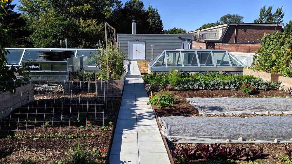 Avling Rooftop Garden