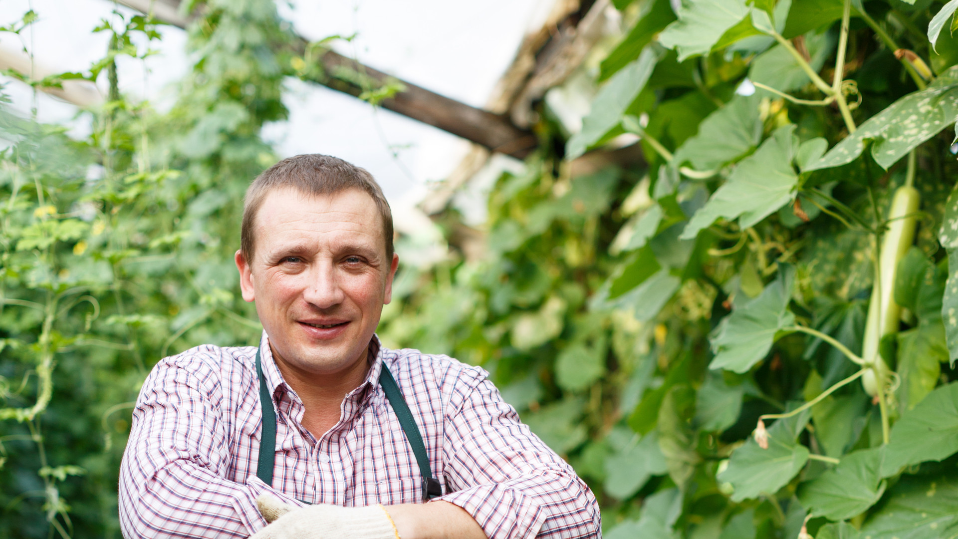 Portrait of adult worker harvesting fres
