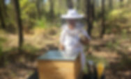 Australian Honey News from Honey In The Garden