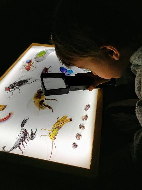 Kit de insectos translúcidos