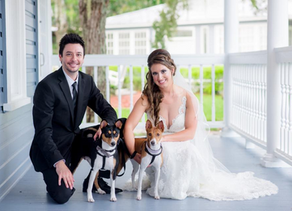 2020 Wedding Trend-Make Your Animals Part of the Big Day!