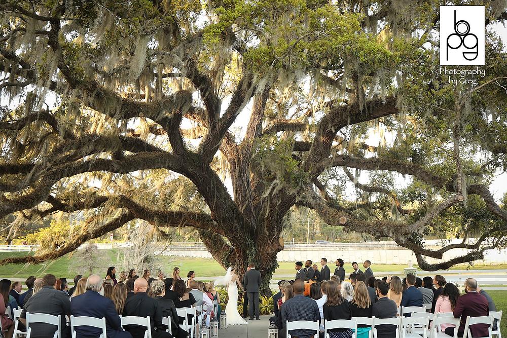 Wedding ceremony Highland Manor oak tree