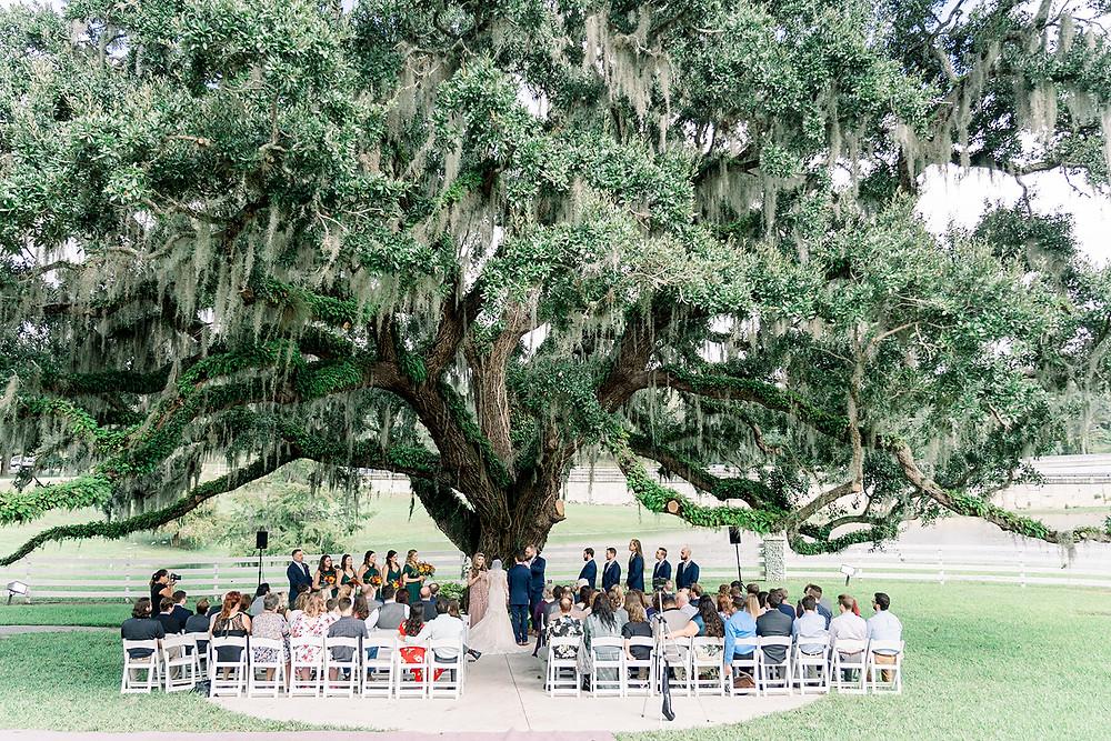 Wedding ceremony at oak tree Highland Manor