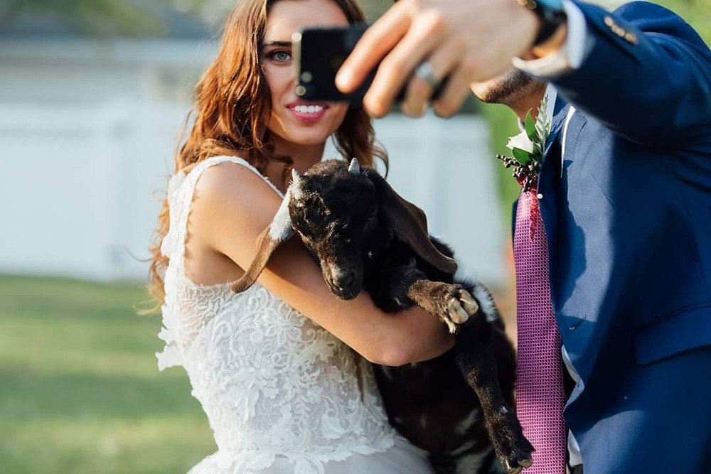 Baby goat is one of many options for animals you can include at your wedding